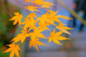 奈良の山寺を訪ねる
